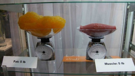 scale one showing five pounds of fat, scale two showing five pounds of muscle